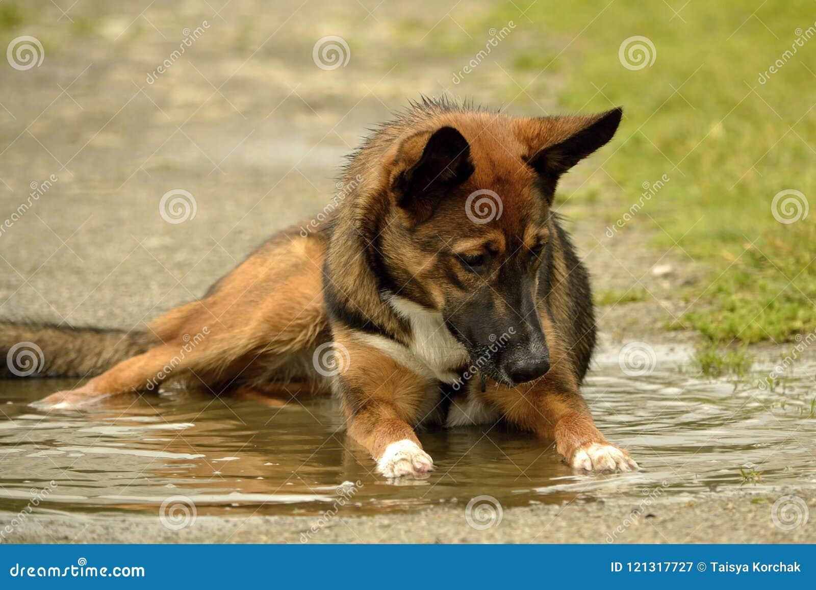 Insolation, santé des animaux familiers pendant l été Comment protéger votre chien contre la surchauffe