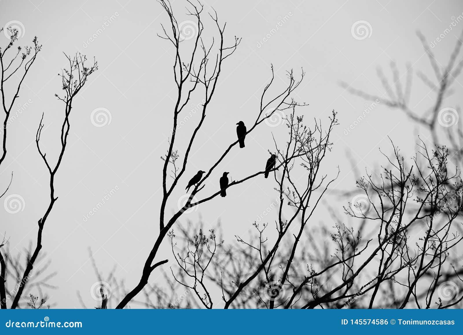 Inspiración del cuervo