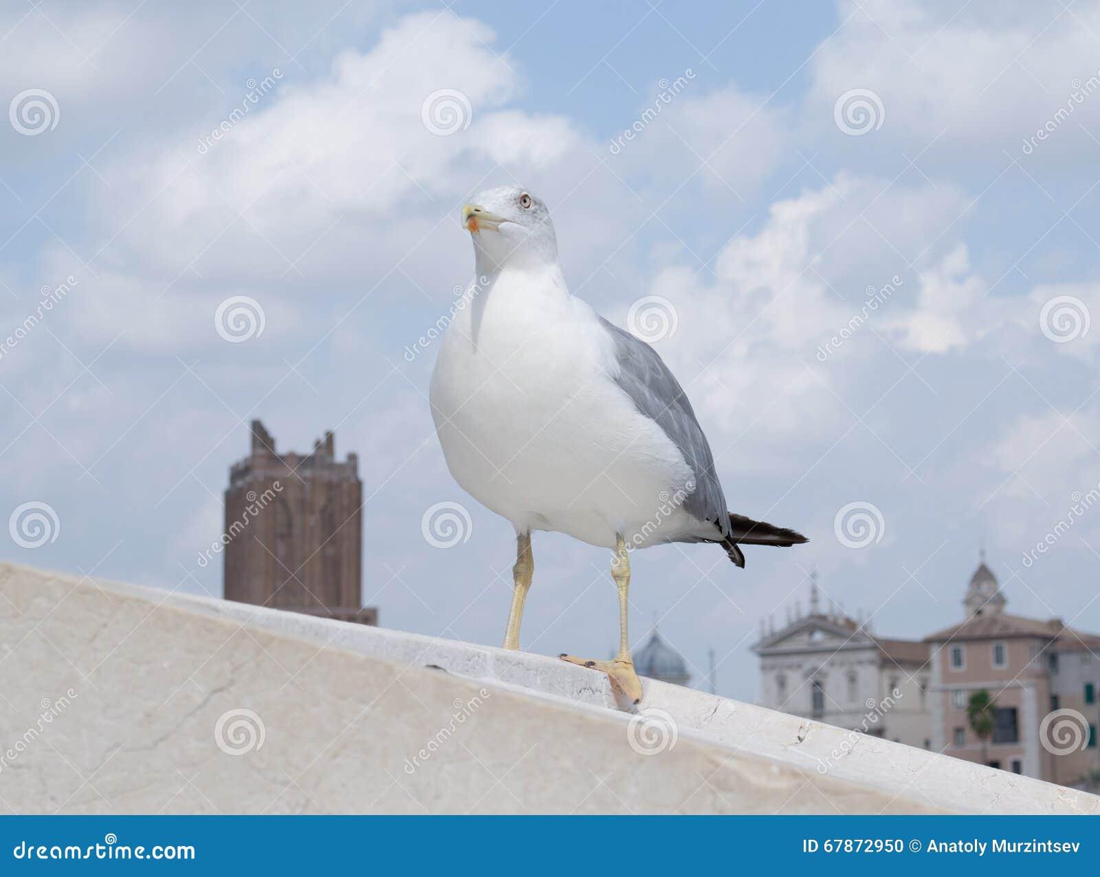 Inspirational image of european herring gull (Larus argentatus)
