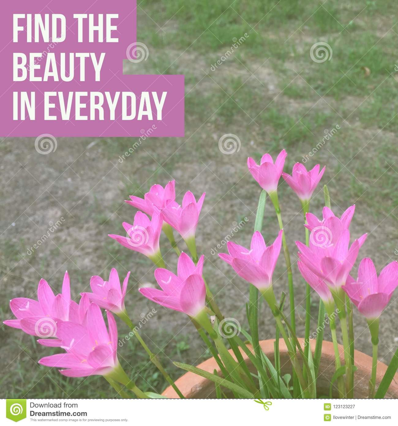 Inspirational motivational quote `find the beauty in everyday.`