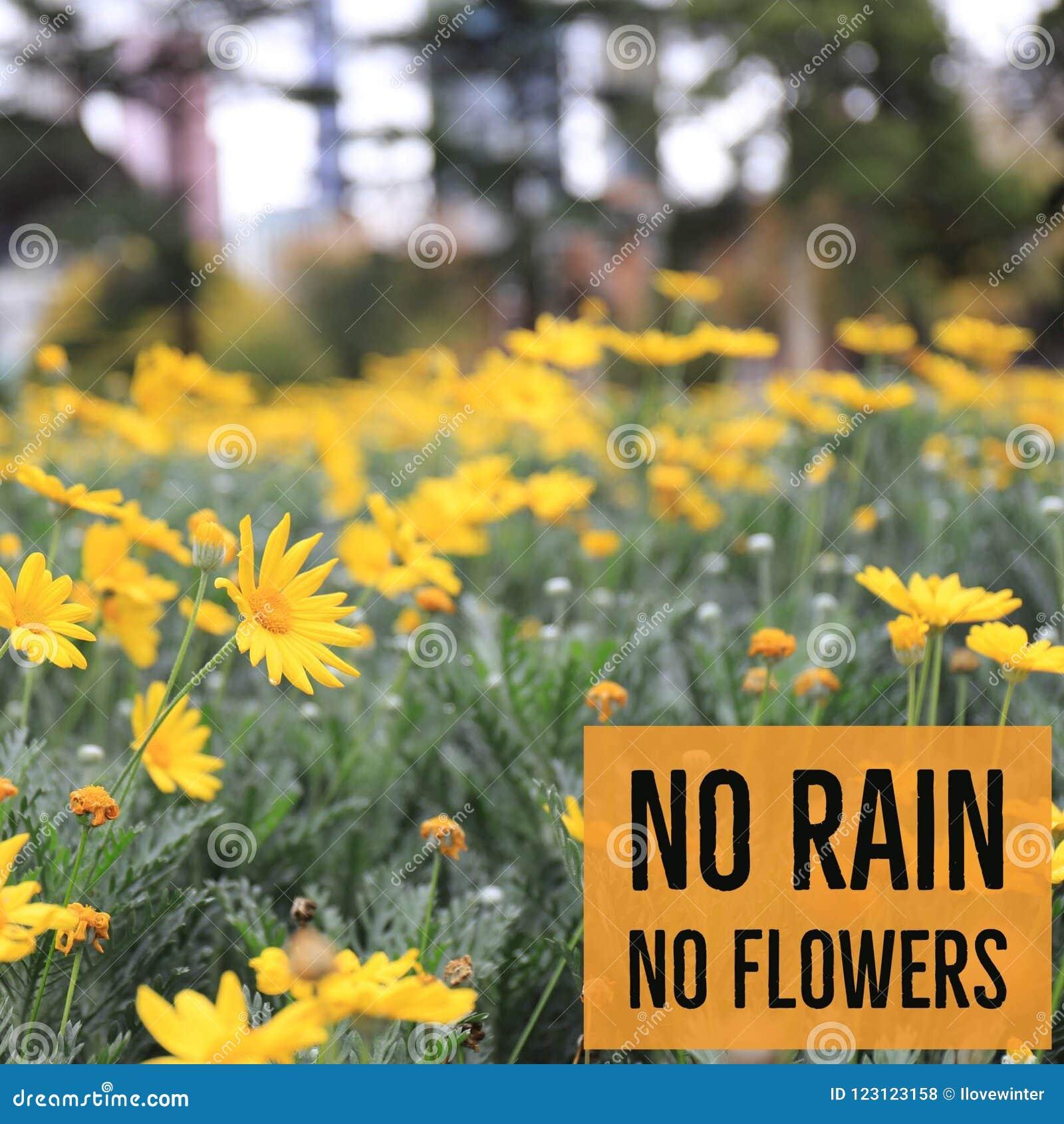 Inspirational Motivational Quote No Rain No Flowers Stock Photo