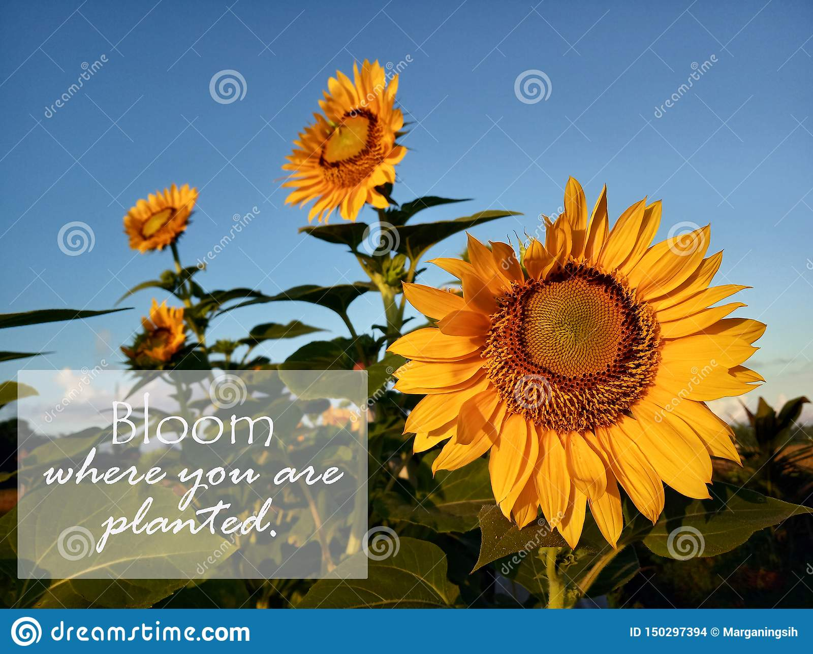 Bloom Where Youre Planted: Daily Adventures in Self Inspiration