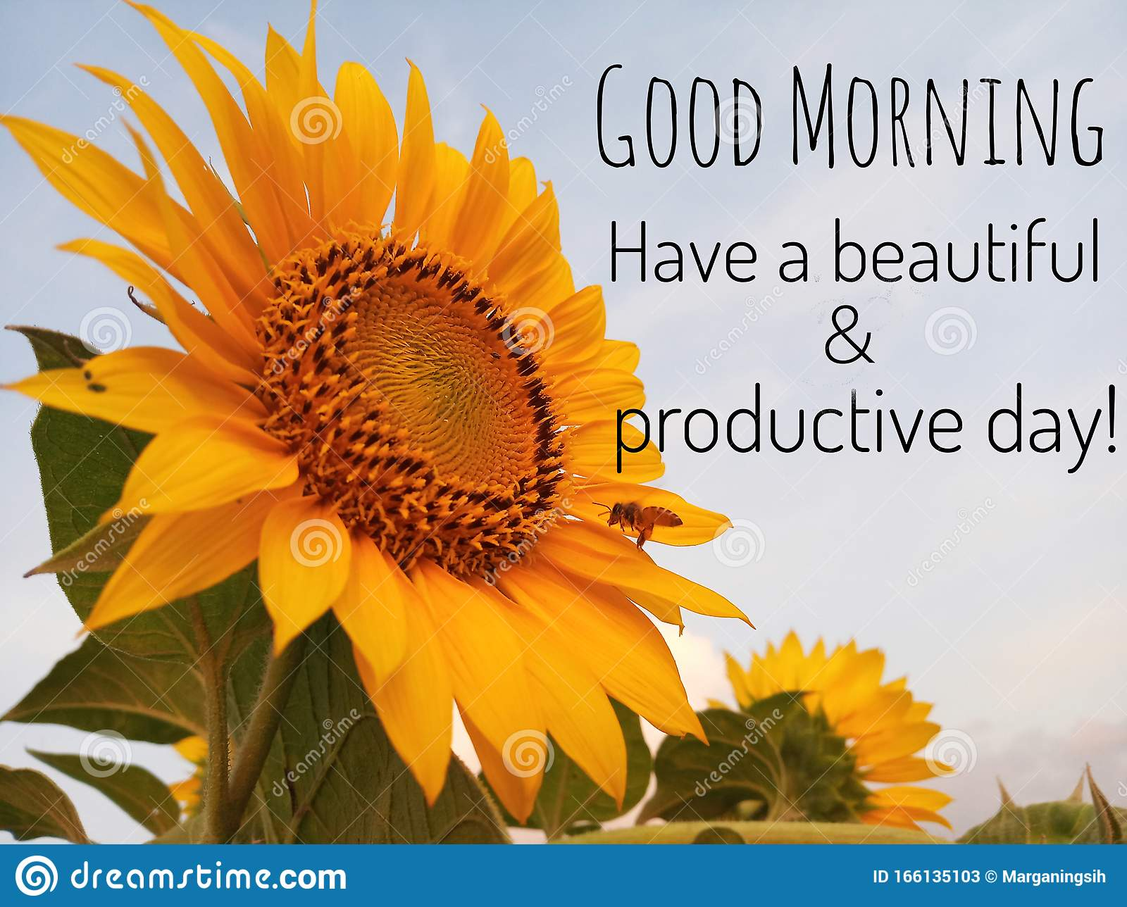 Inspirational Quote Good Morning Have A Beautiful And Productive Day With Background Of Blue Sky Beautiful Big Sunflower Stock Image Image Of Beautiful Start 166135103