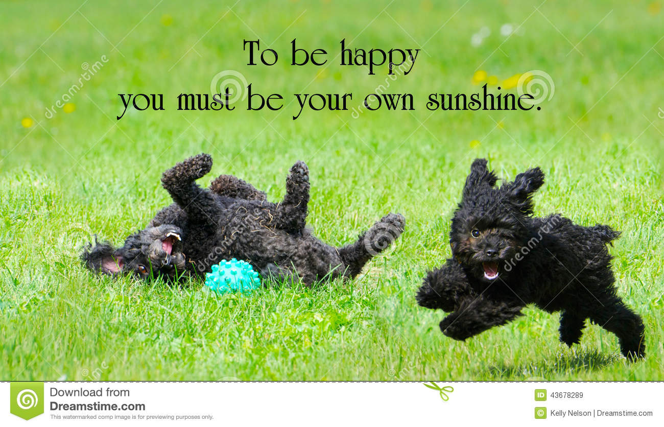 Inspirational Quotes On Happiness And Life Inspirational Quote Stock Imageimage Of Concept Life  43678289