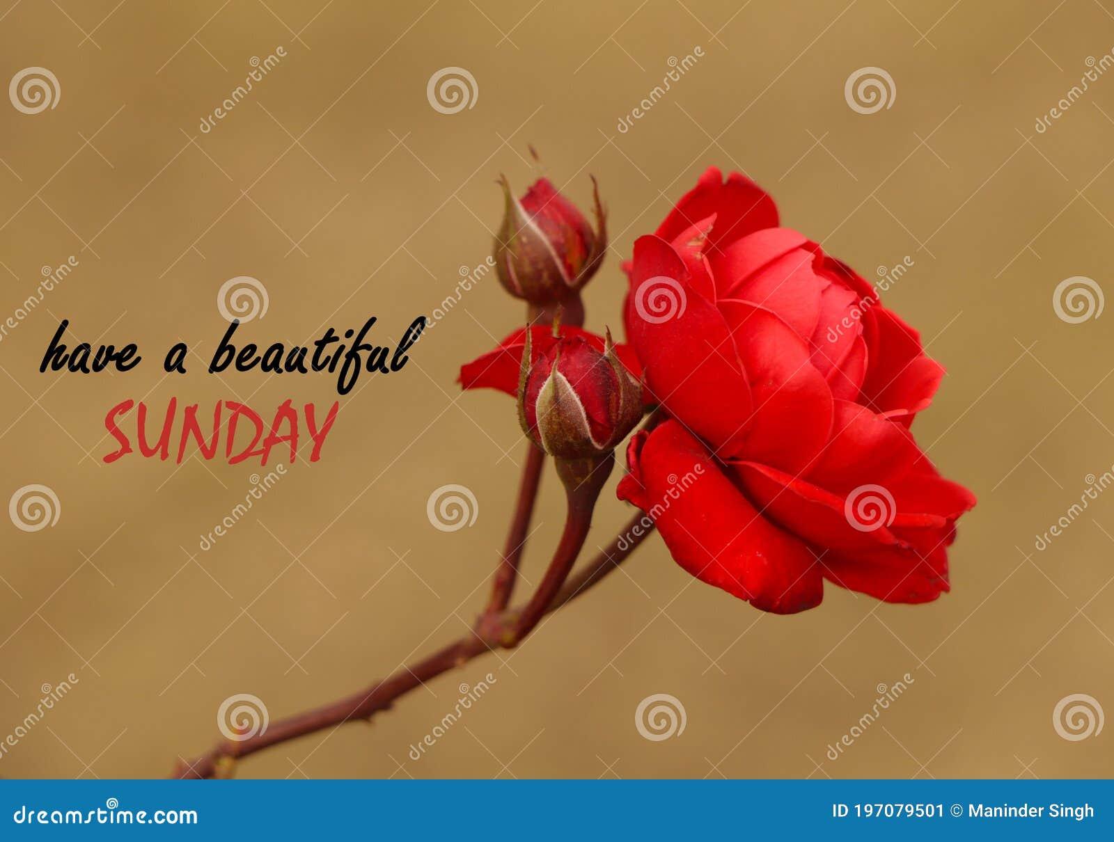 20,20 Beautiful Sunday Photos   Free & Royalty Free Stock Photos ...