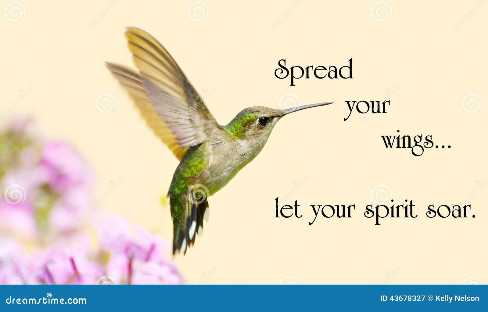 hummingbird quotes life quotesgram