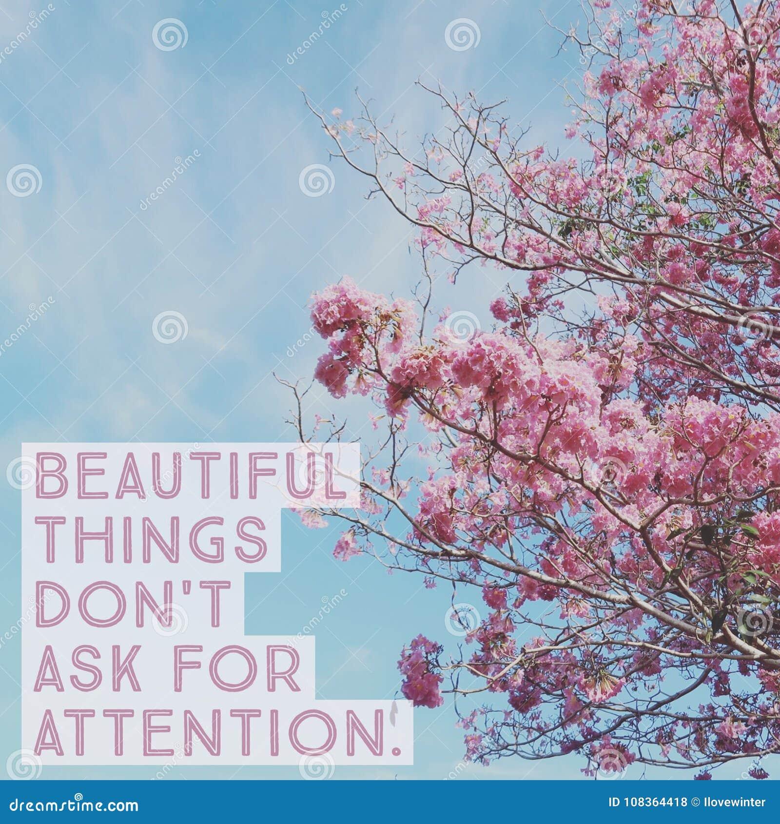 Inspirierend Motivzitat ` schöne Sachen ziehen ` t bitten um Aufmerksamkeit ` an