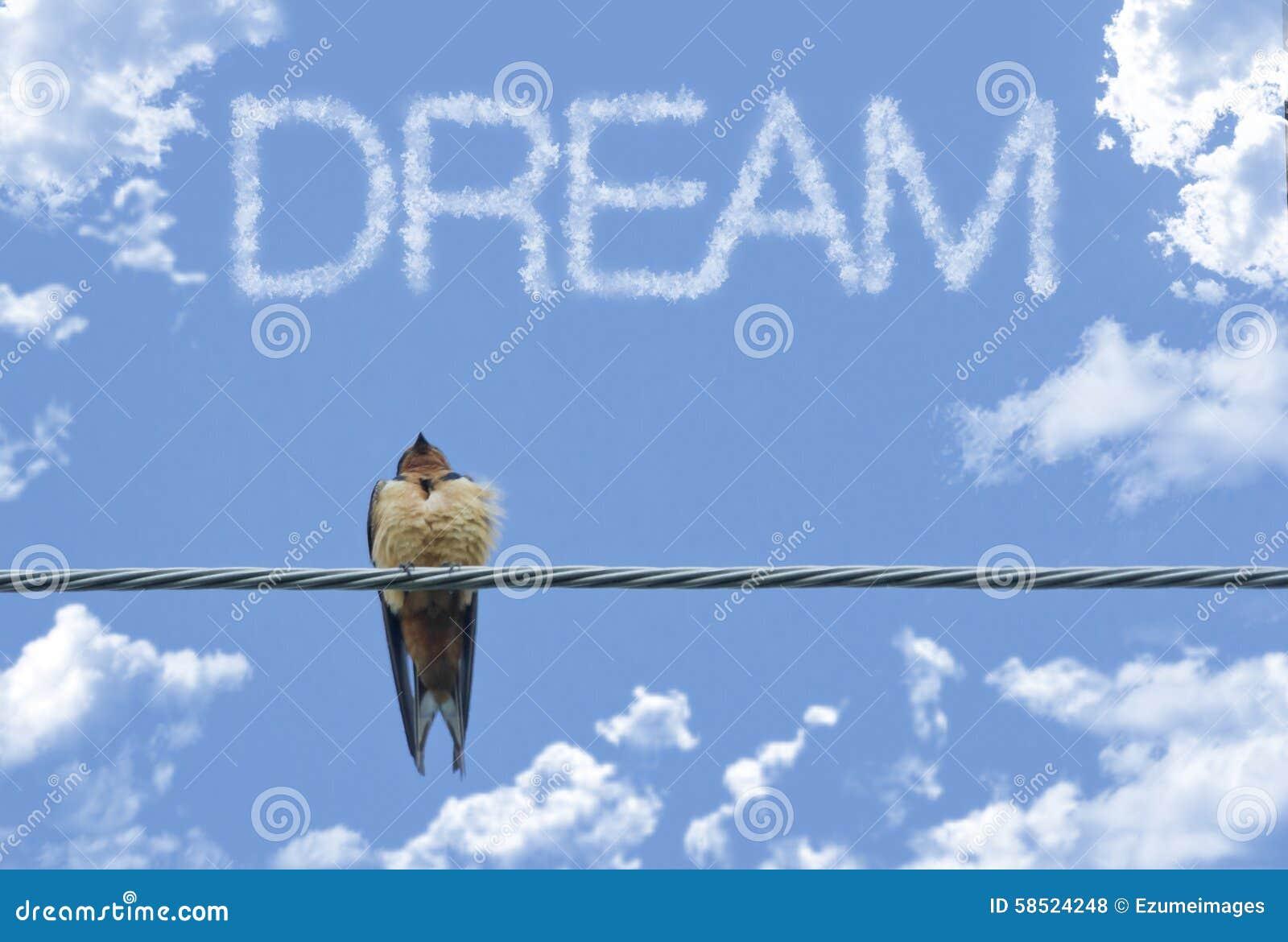 Inspiring Sparrow Dream stock photo. Image of bird, inspiring - 58524248