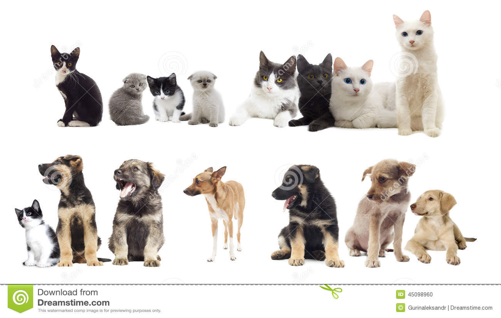 Inställda husdjur