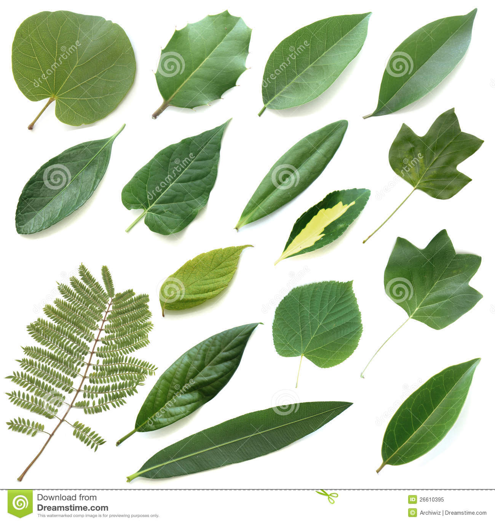 Inställda isolerade leaves