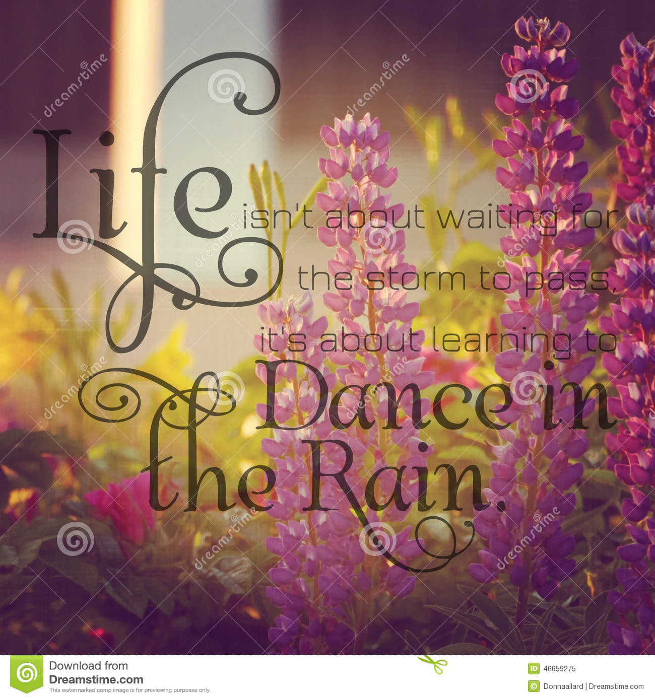 Instagram Of Lupins With Inspirational Quote Stock Image Image Of