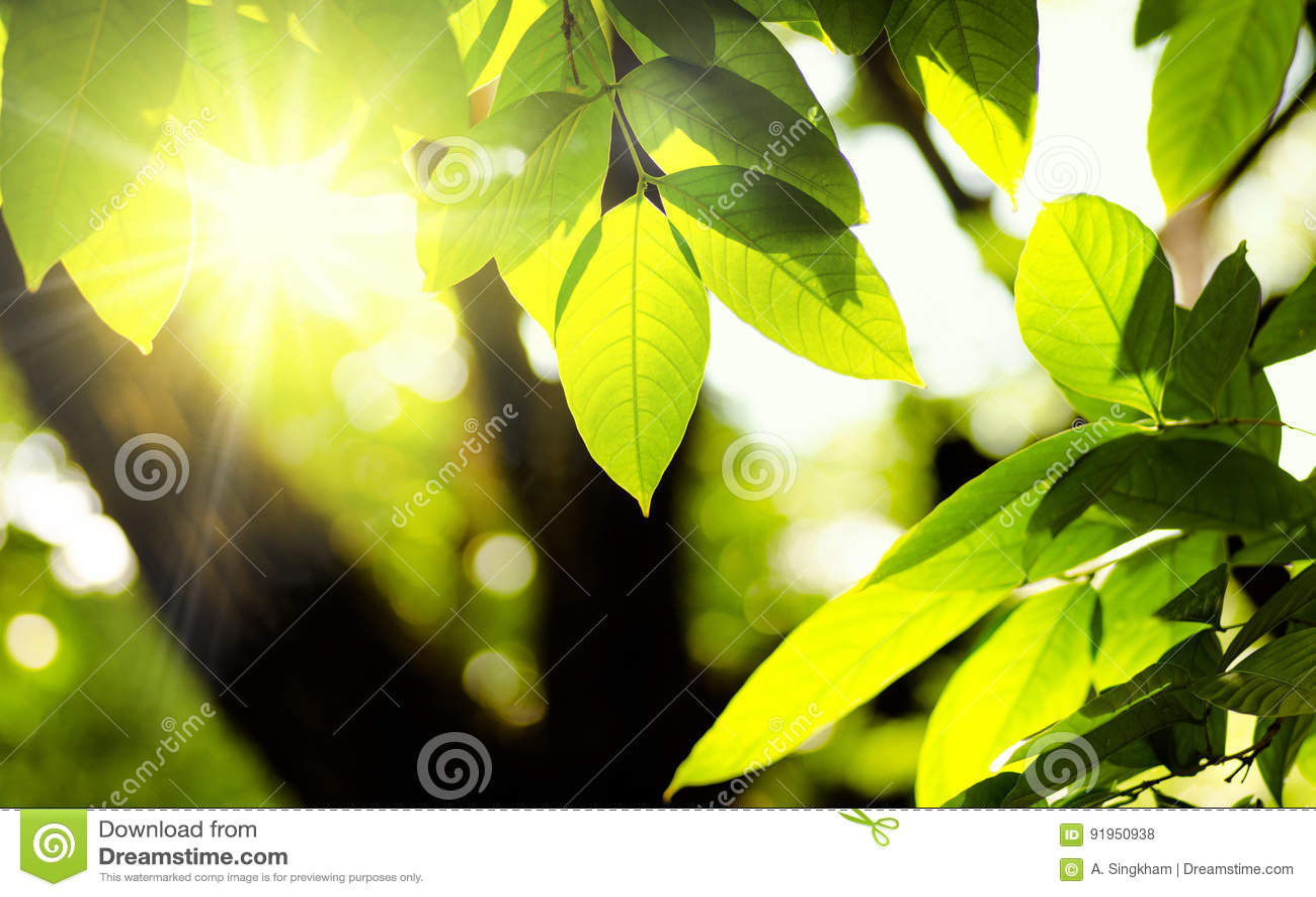 Installatie en natuurlijk groen milieu met zonlicht