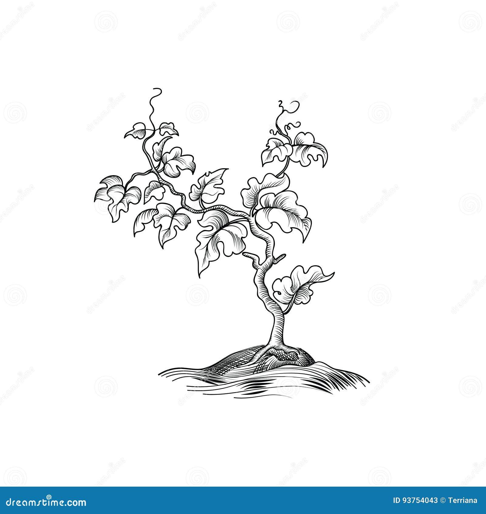 Installatie met bladeren het graveren De decoratieve groei van de druivenboom Bonsa