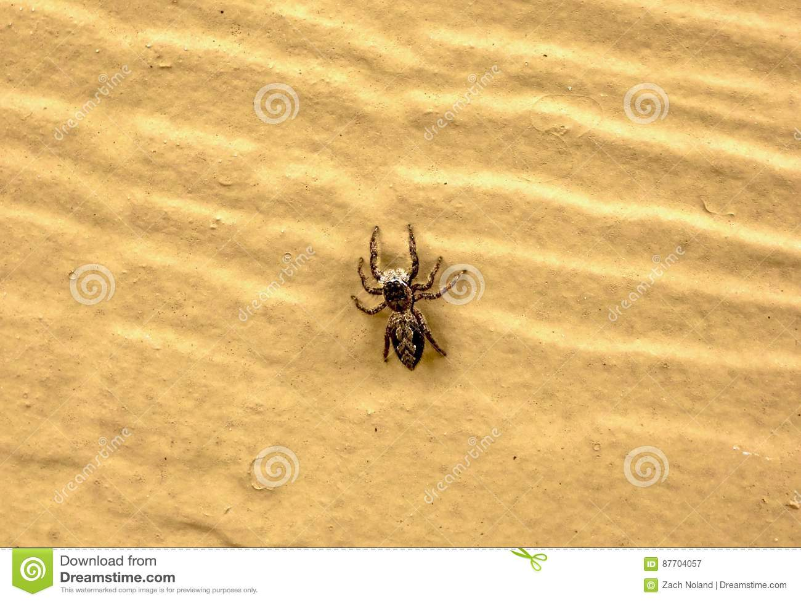 Instruction-macro d une araignée branchante de Brown