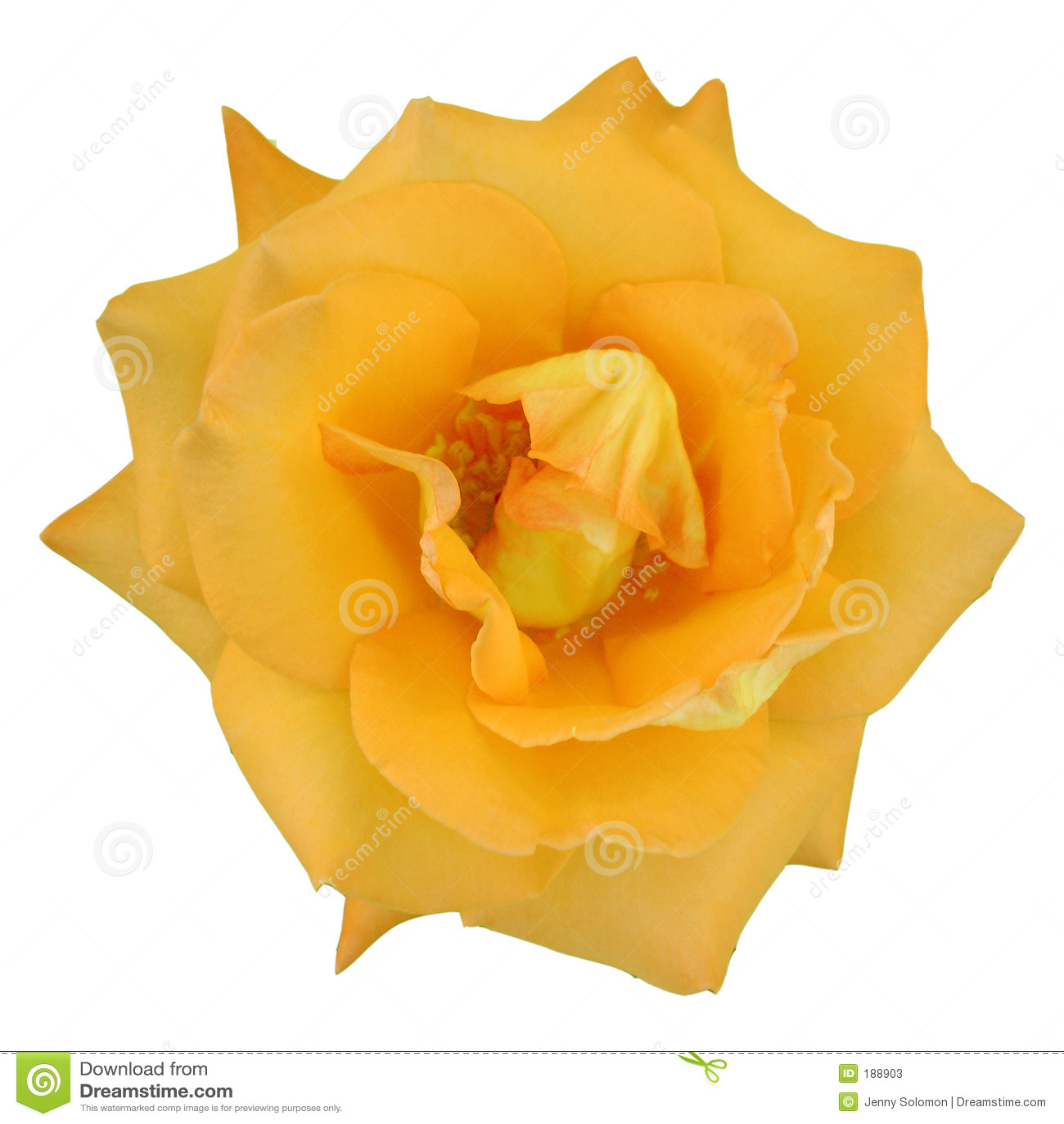 Instruction-macro d une rose