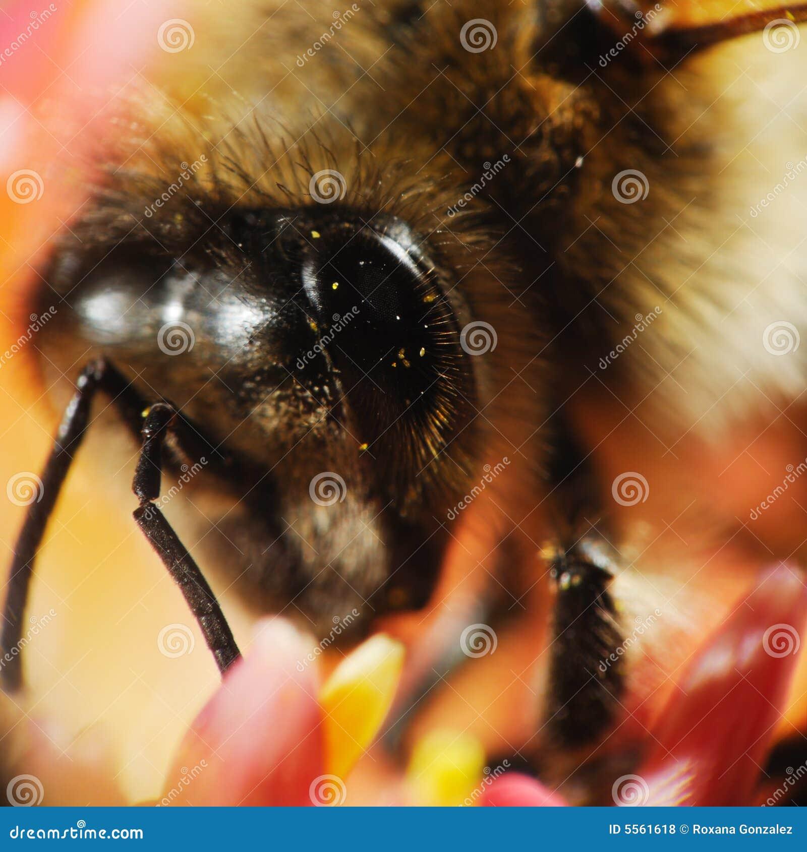 Instruction-macro principal d abeille