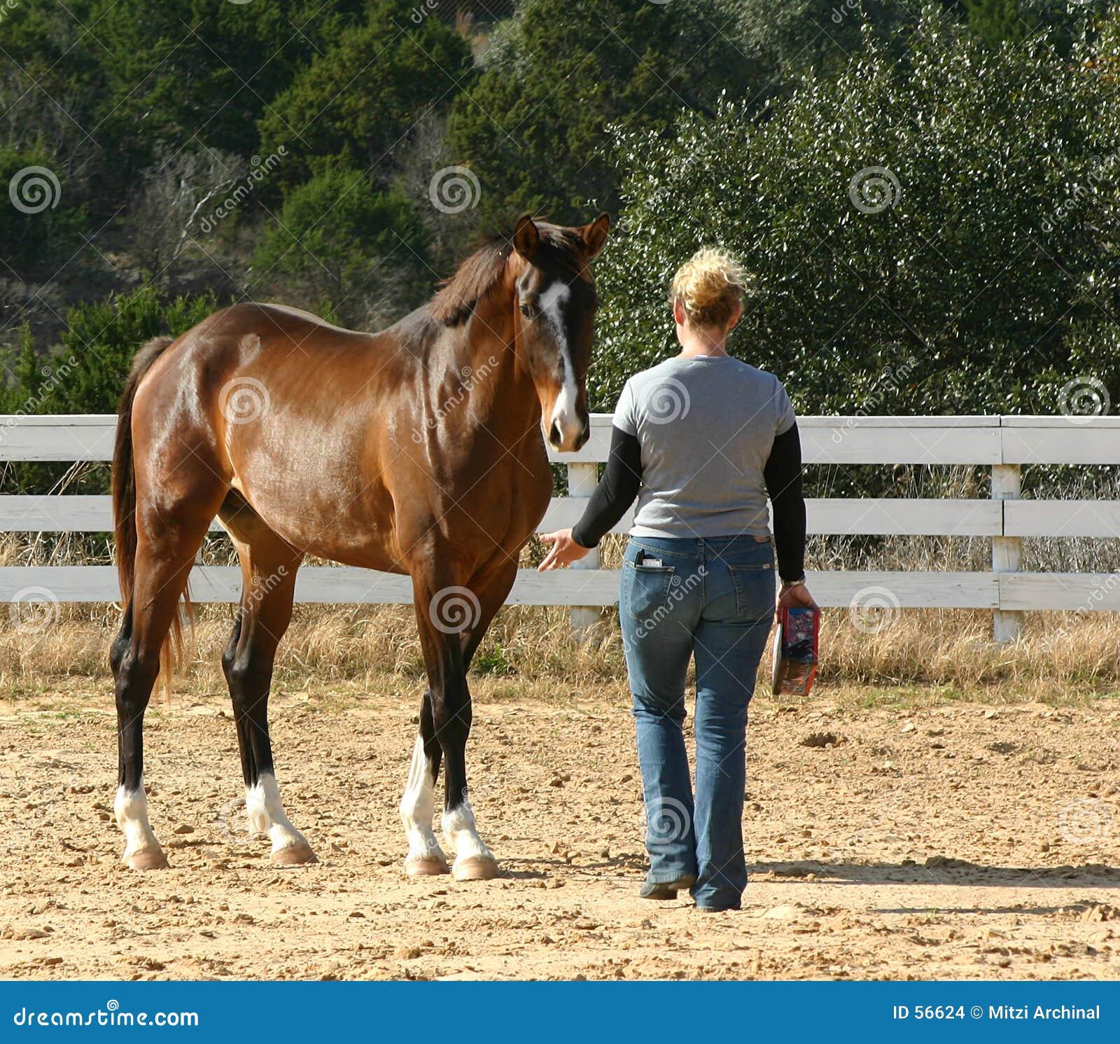 Instrutor de cavalo