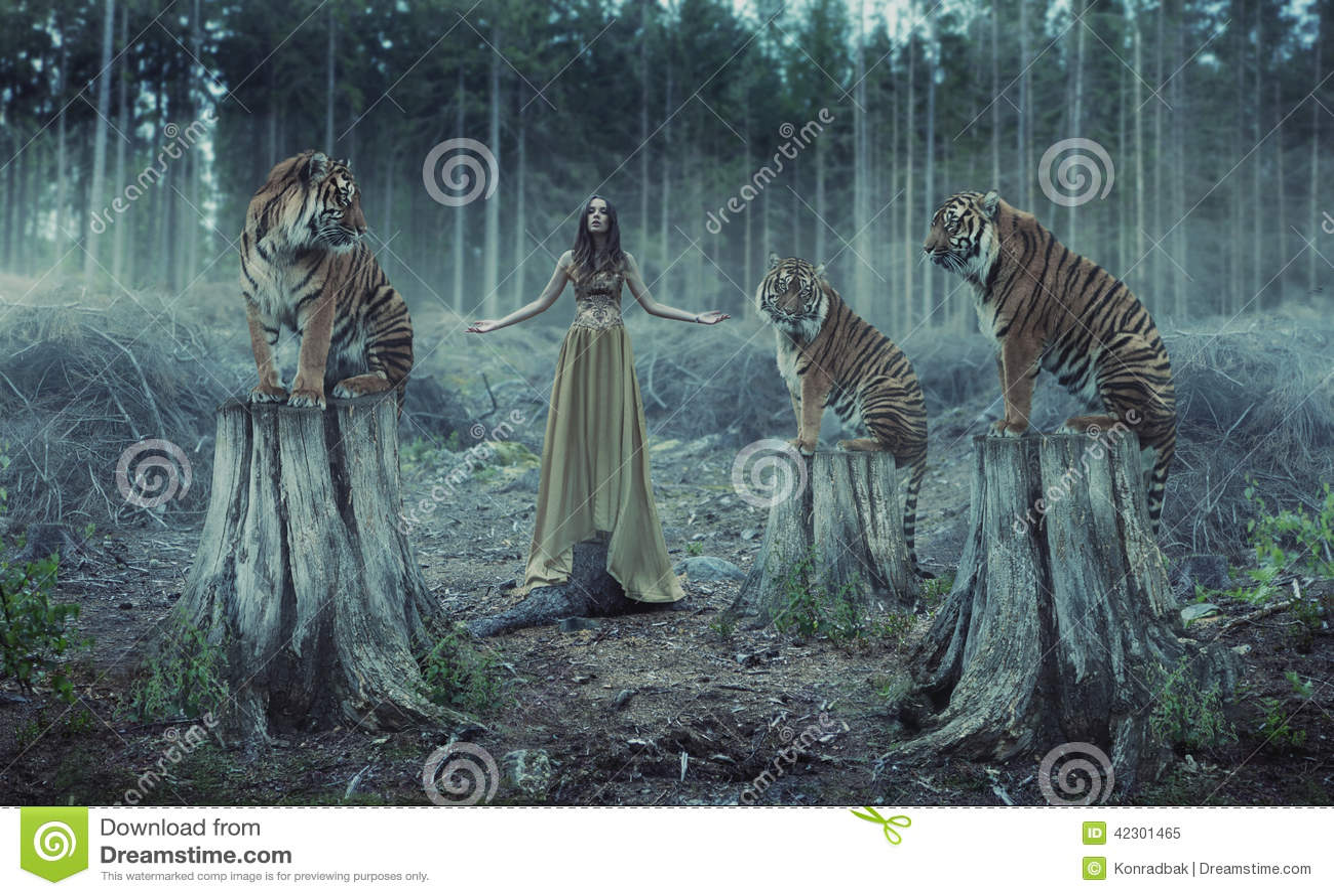 Instrutor fêmea atrativo com os tigres