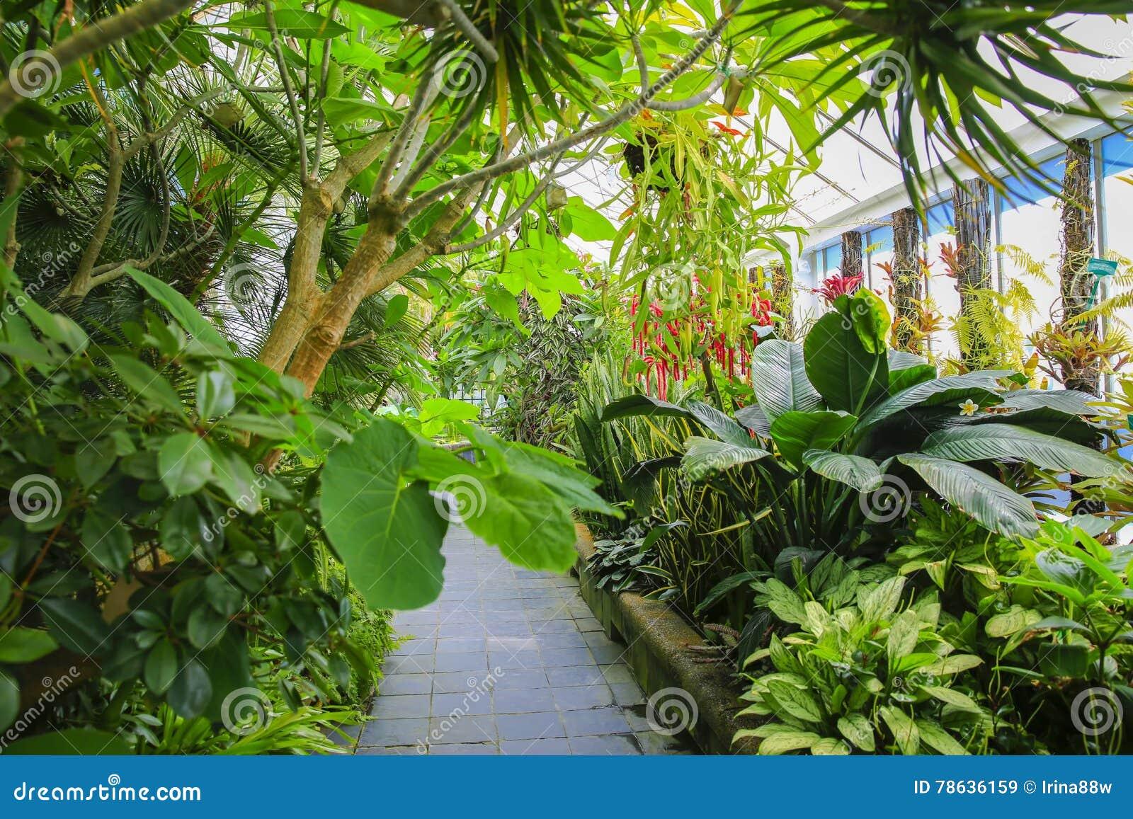 Intérieur de maison de bégonia, Wellington Botanical Garden, Nouvelle-Zélande