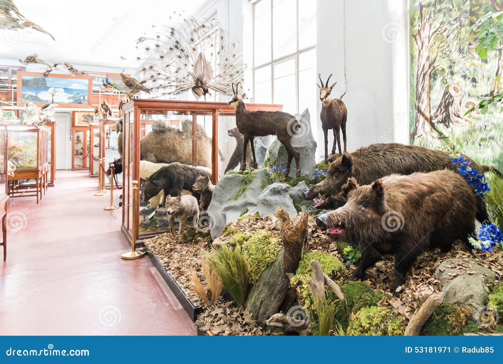 Intérieur de musée zoologique de Cluj