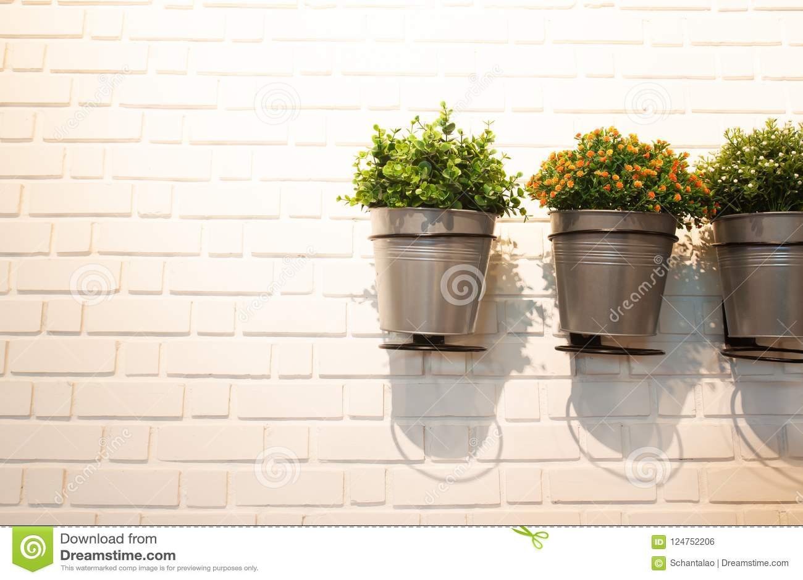Plante Sur Les Murs intérieur moderne de mur avec peu de plante en pot de jardin