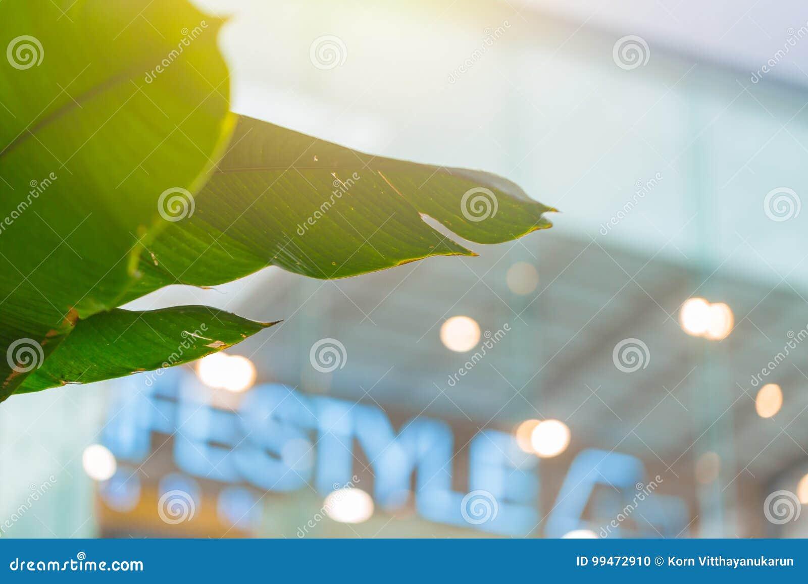 Intérieur vert de bureau de bâtiment deco avec le jardin darbre d