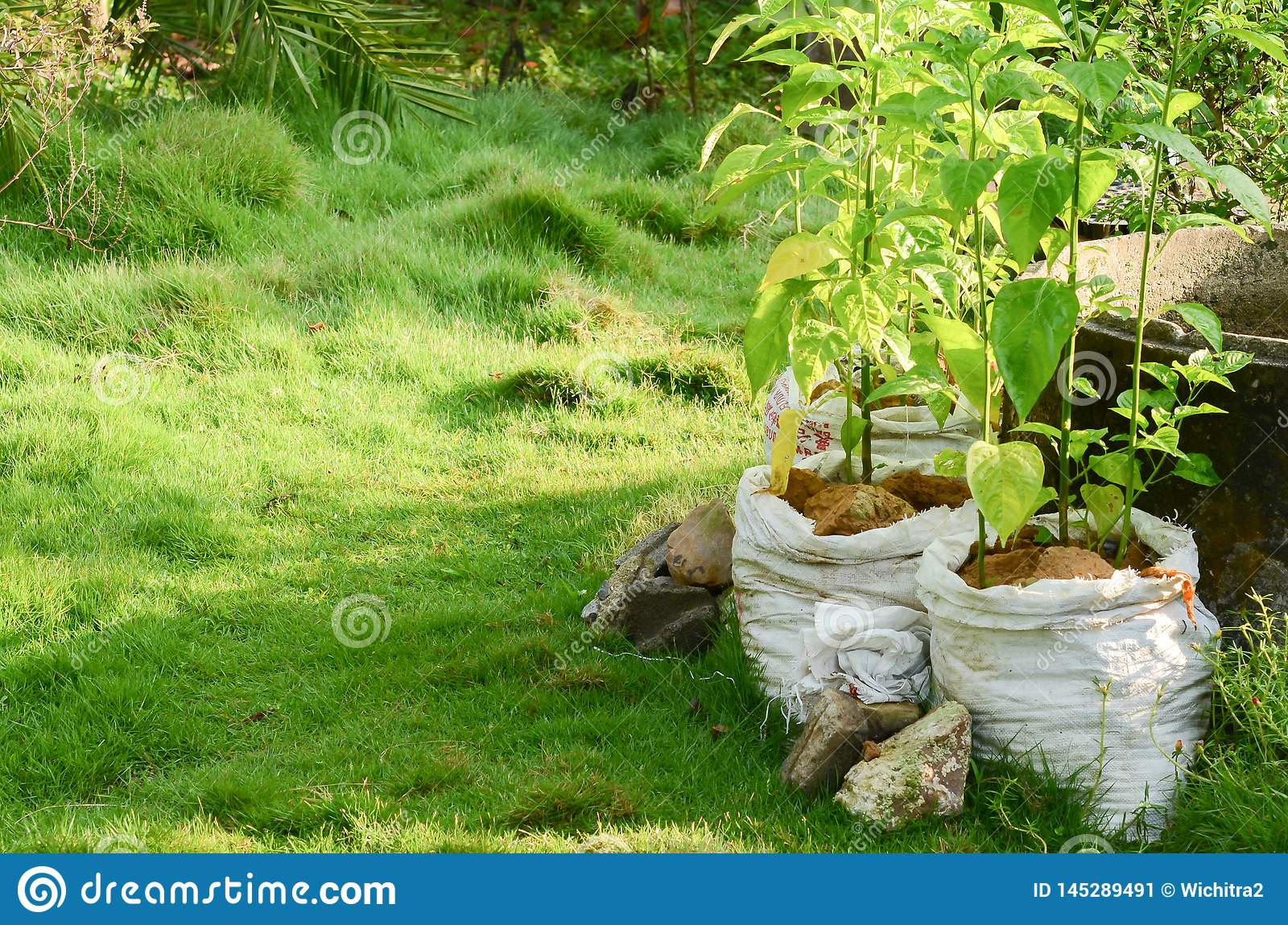 Agricultural system in Thailand, Name is Thailand`s Sufficiency Economy,pepper in white pot
