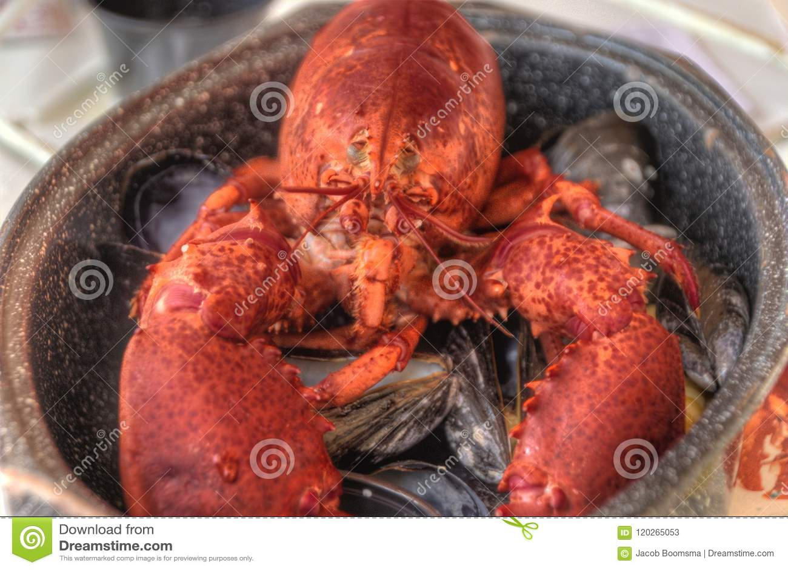 Intera aragosta arrostita con i crostacei della cozza in un vaso
