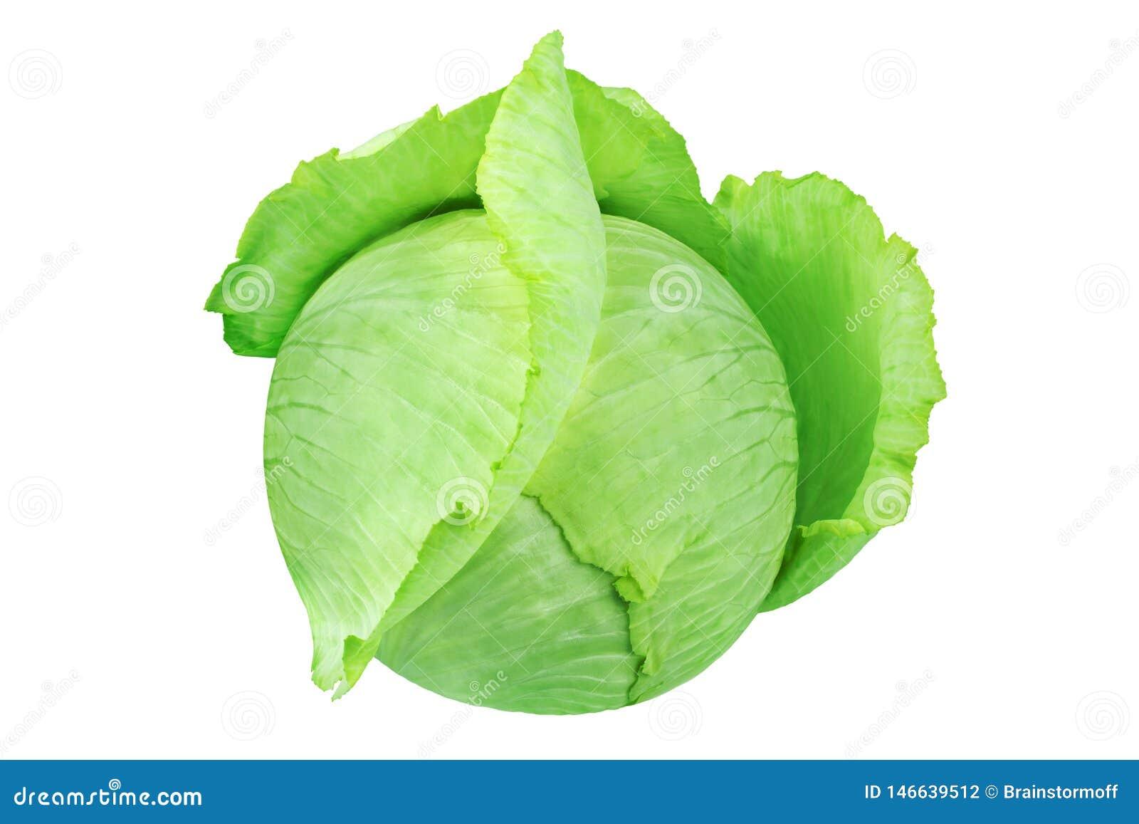 Intera testa di cavolo frondoso verde sulla fine isolata fondo bianco su, intorno a cavolo cappuccio bianco maturo con le foglie