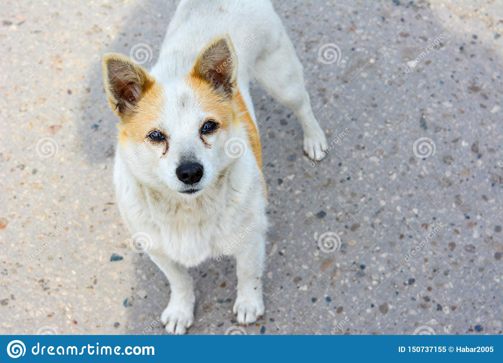 Interessierter Blick einer obdachlosen Hundestellung auf der Straße