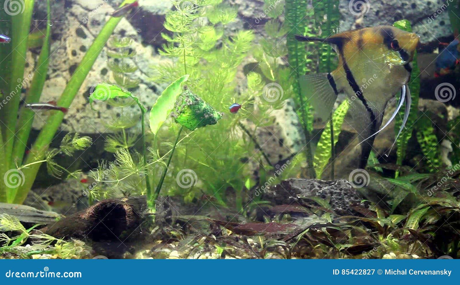 Interesting Video Of Fish Life In Aquarium And Fish Swiming Stock