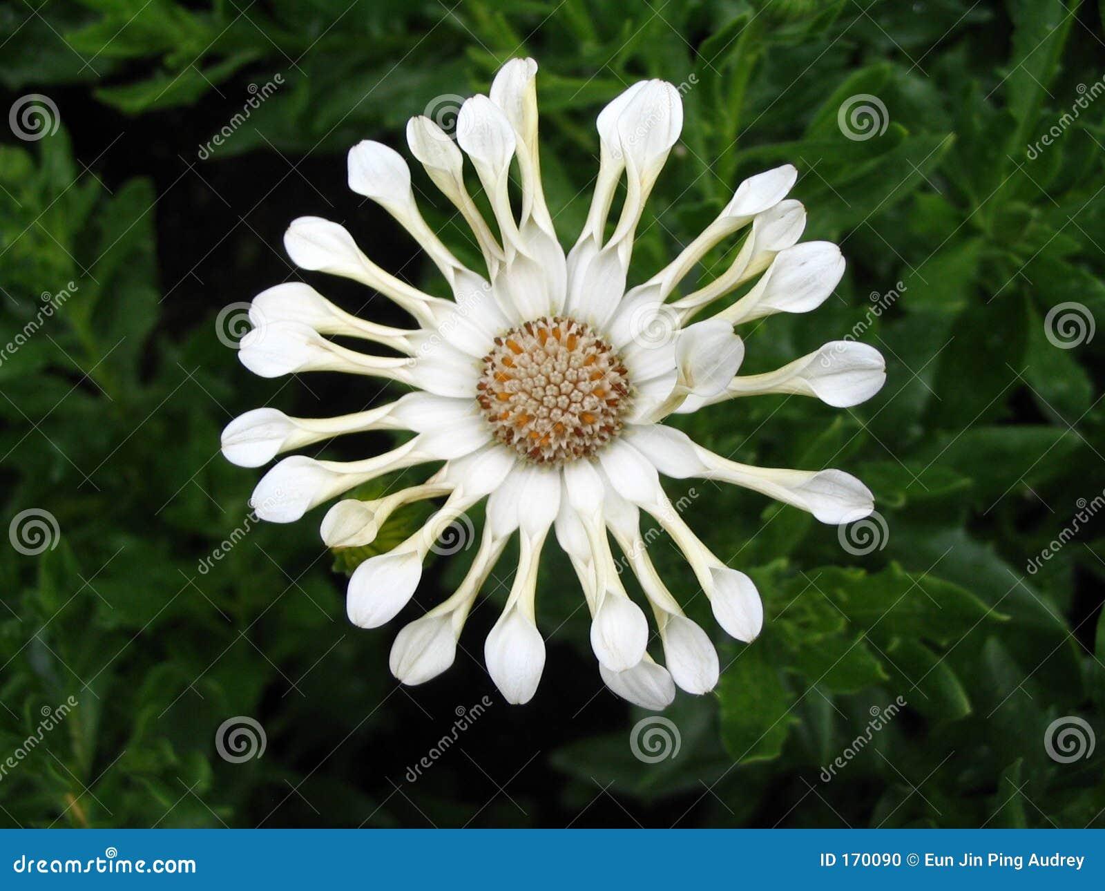 Interesting White Flower