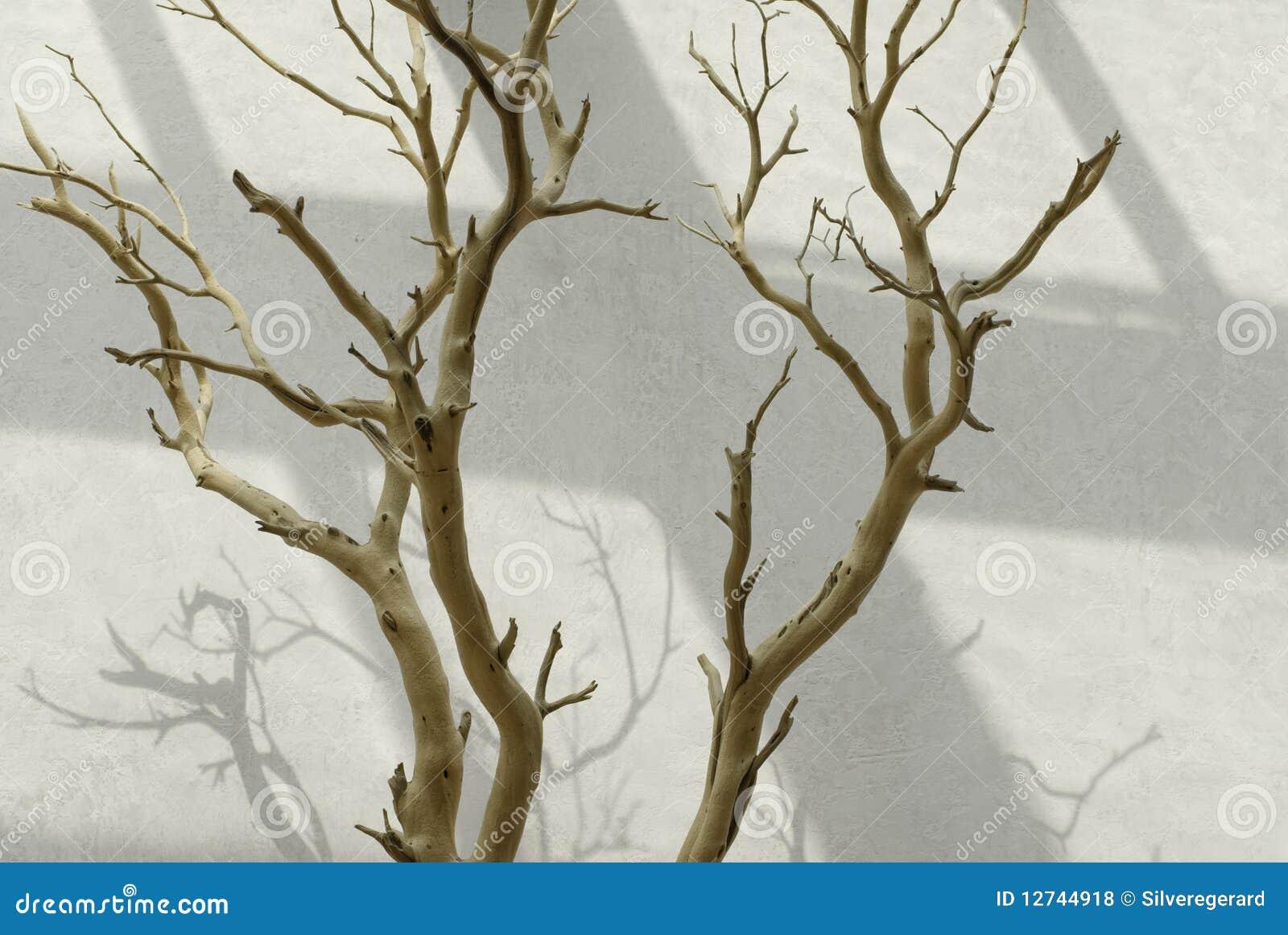 Interieur Fotografia Stock Immagine Di Albero Colore 12744918