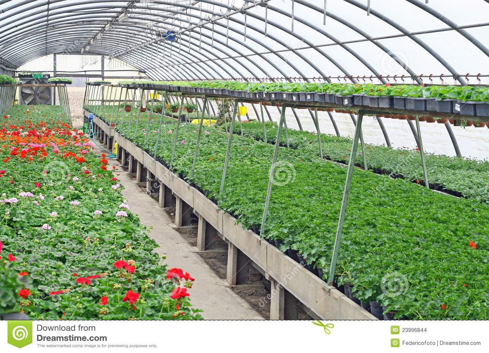 Interior de un invernadero para las flores y las plantas Plantas de invernadero