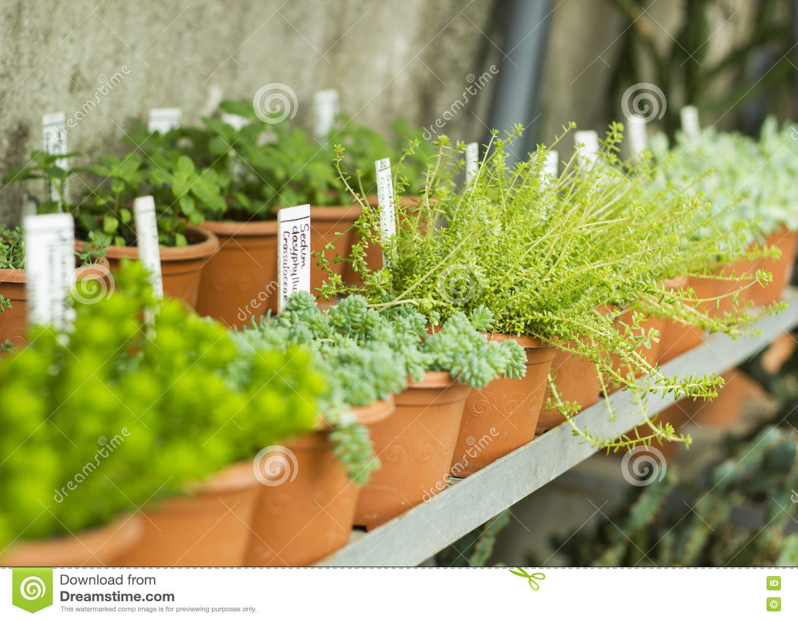Interior del invernadero para las flores y las plantas for Plantas para invernadero