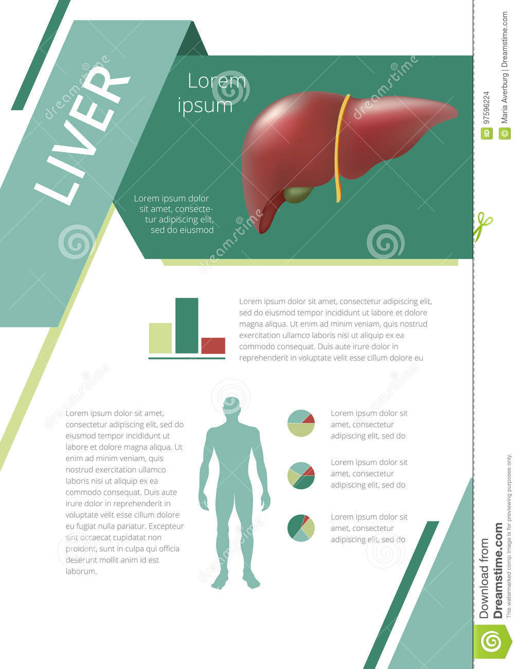Internal Human Organs Infographic Liver Stock Vector - Illustration ...