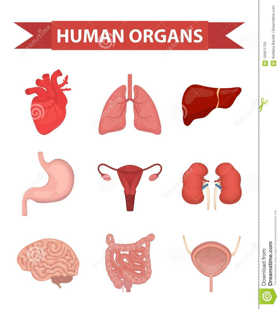 Internal Organs Of The Human Icons Set Flat Style Collection With