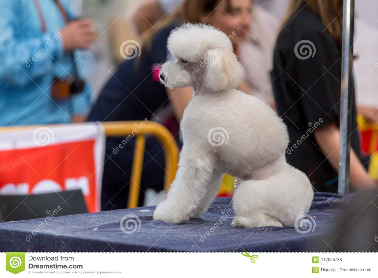 International Dog Cosmetic Competition In Sant Antoni De