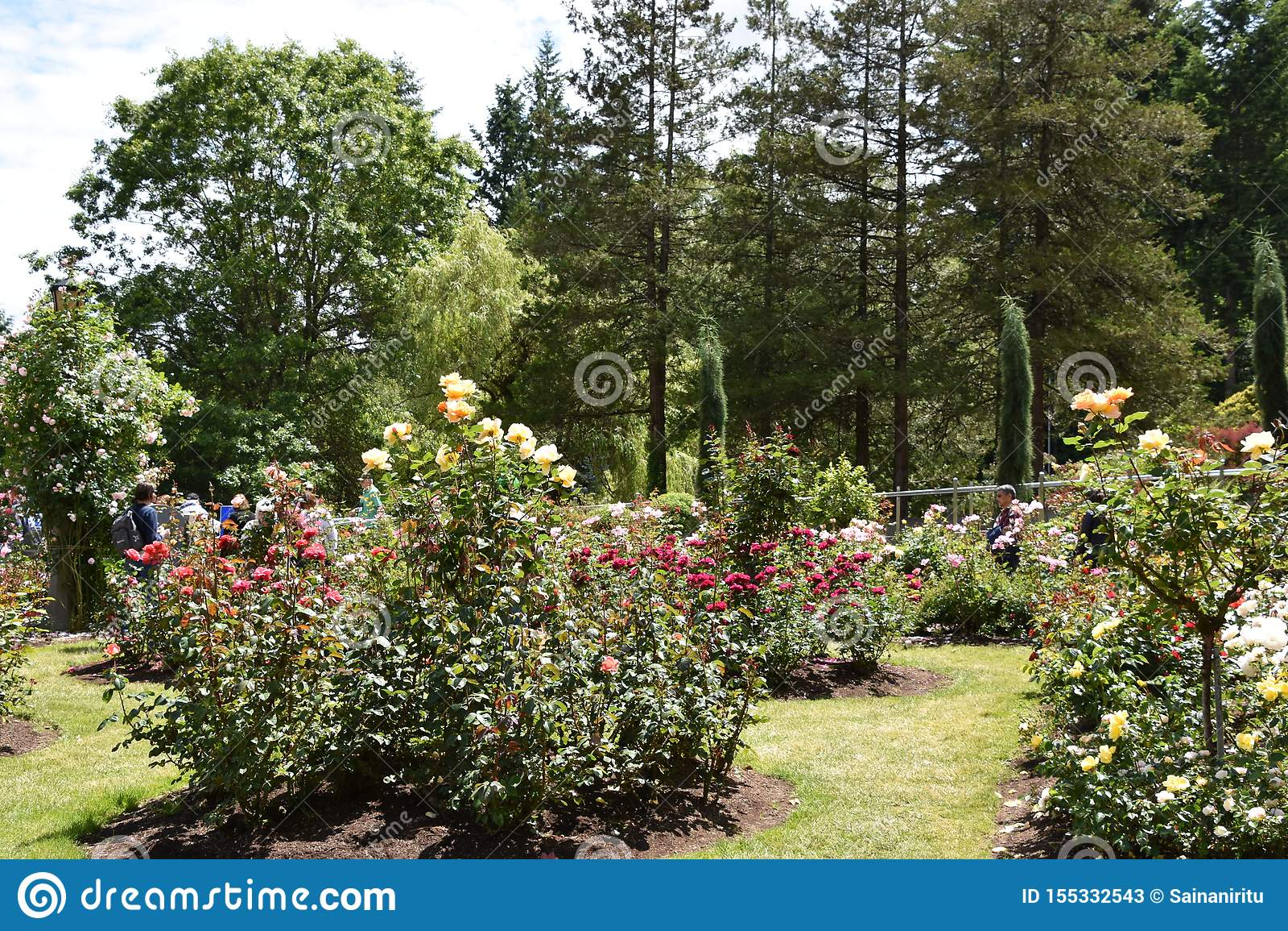 International Rose Test Garden In Portland Oregon Stock Image