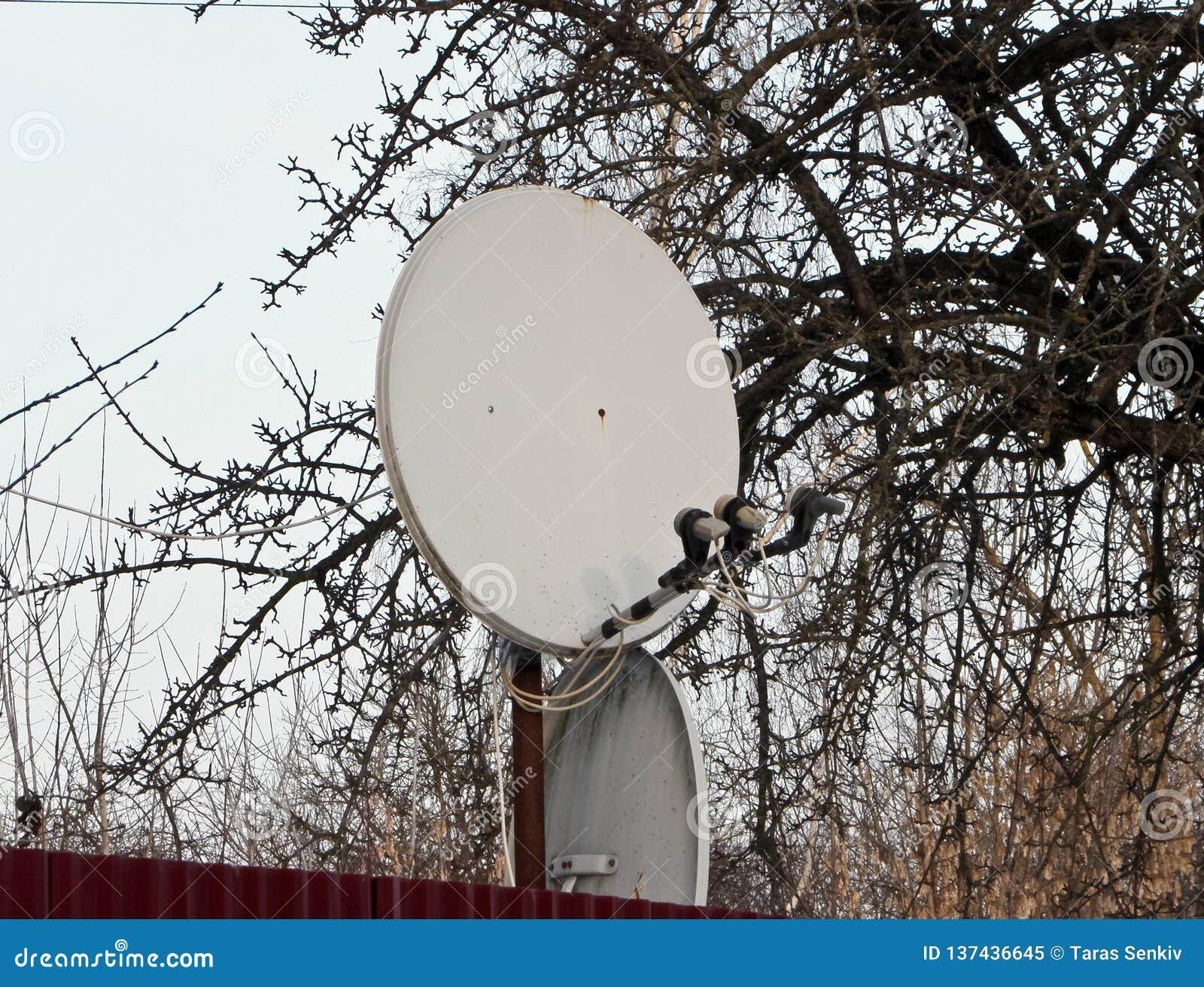 Internetowa komunikacja i TV antena satelitarna instalująca przy zielonym drzewa tłem na dachu dom