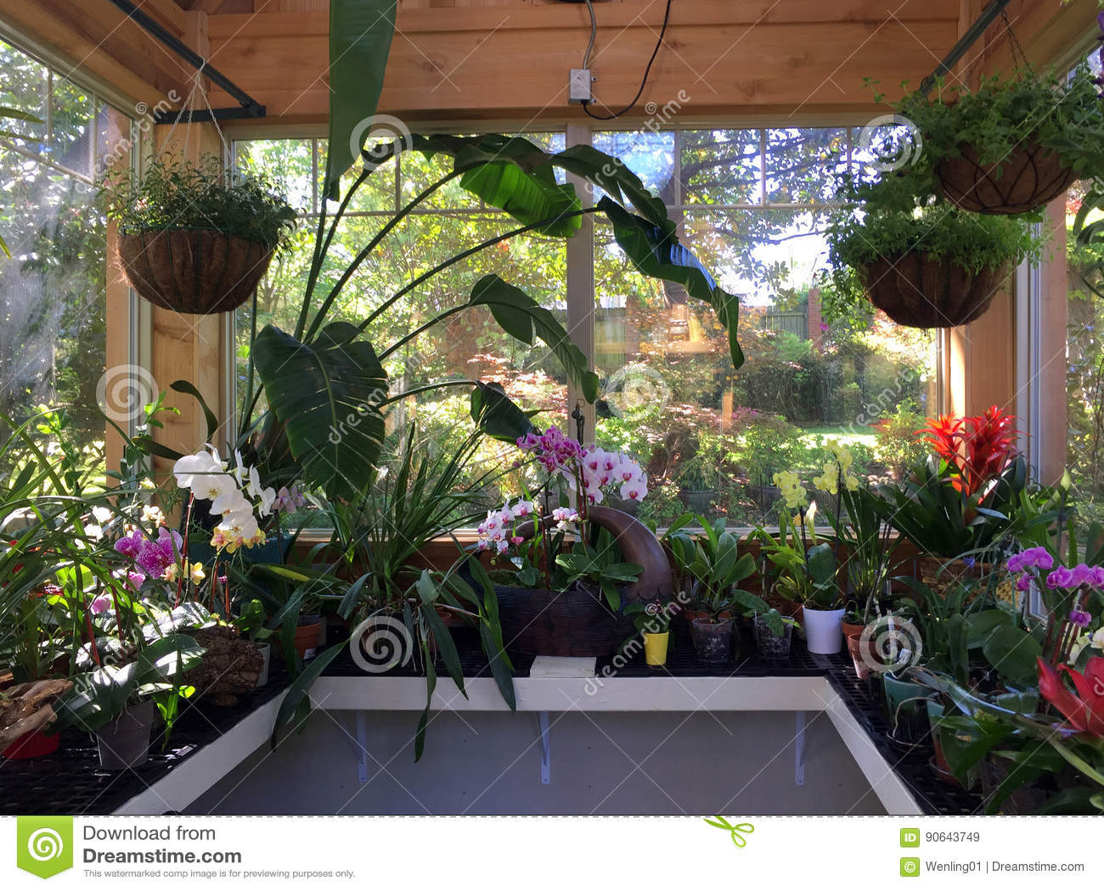 Piccole Serre Da Casa interno di piccola serra che pianta le orchidee immagine