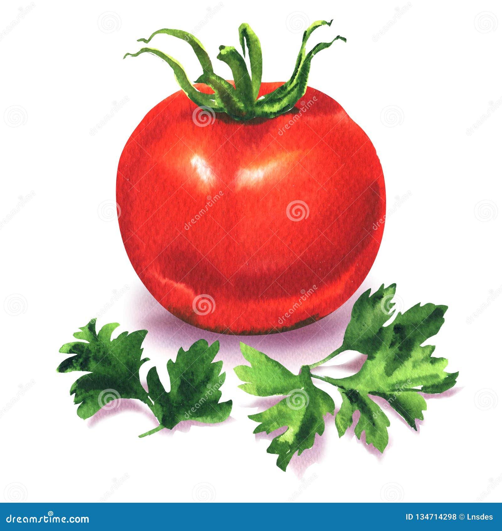 Intero pomodoro rosso maturo con prezzemolo verde, la verdura fresca e l erba della spezia, ingredienti per insalata, isolato, di