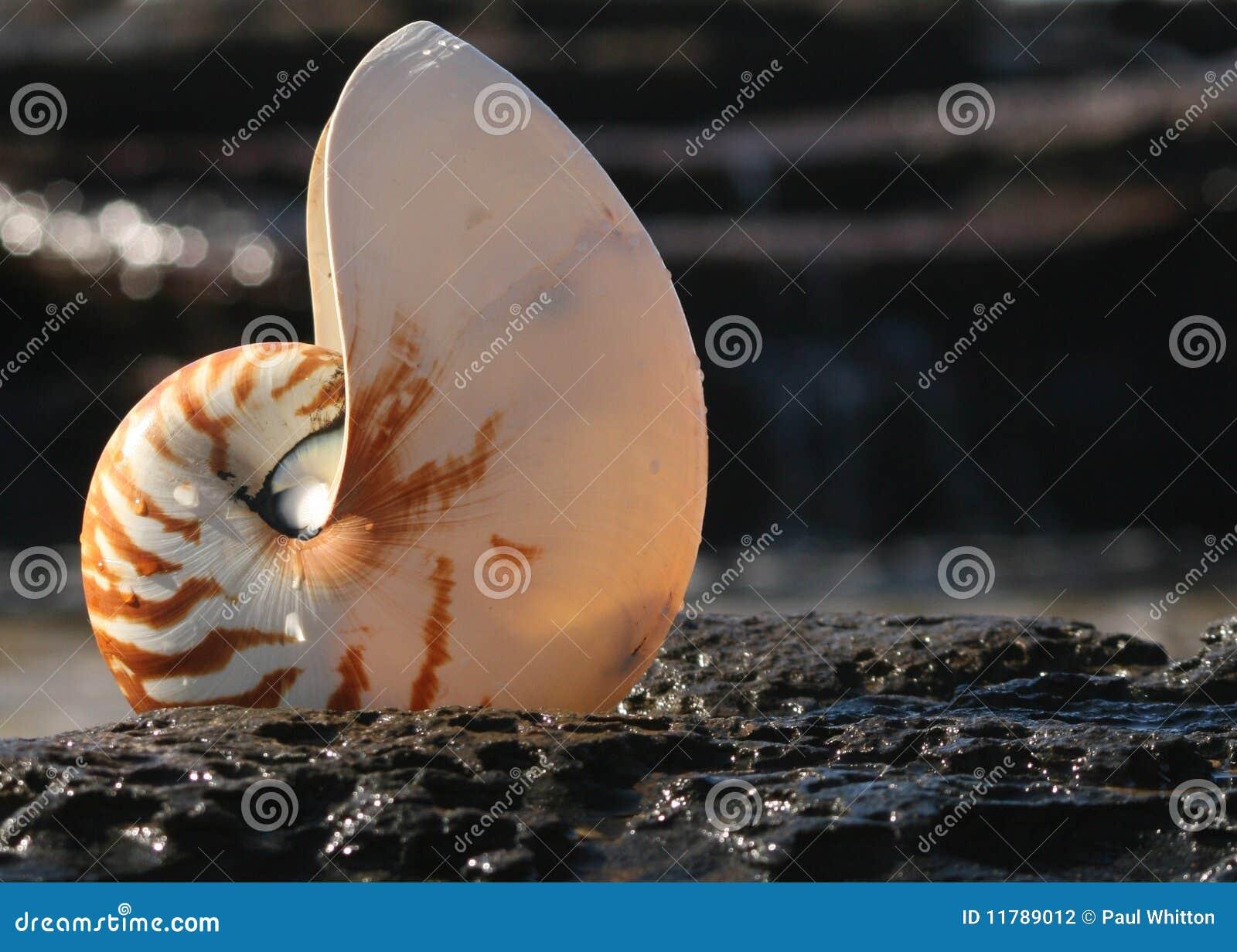 Interpréteur de commandes interactif de Nautilus