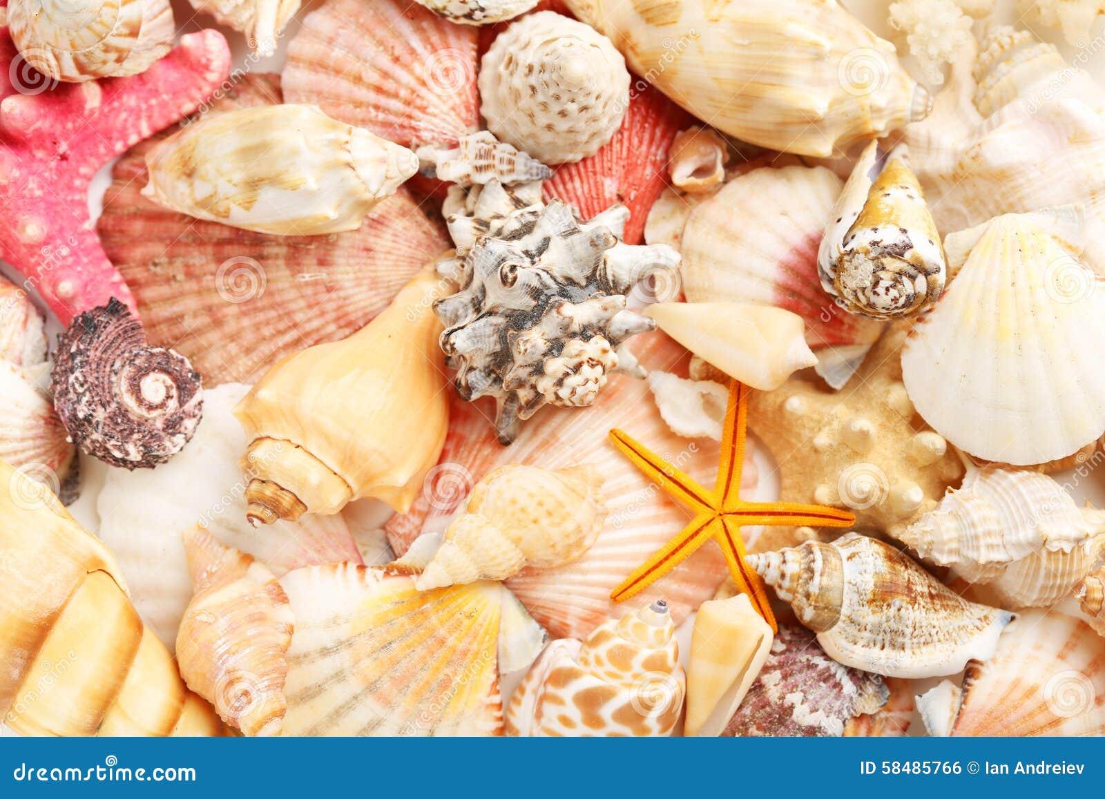 Interpréteurs de commandes interactifs de mer