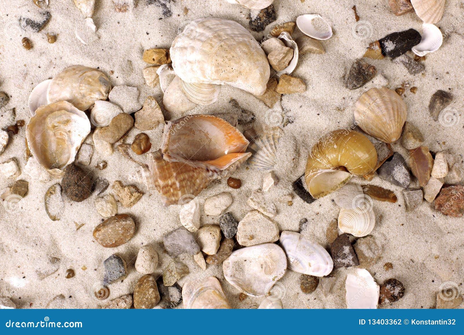 Interpréteurs de commandes interactifs de mer en sable