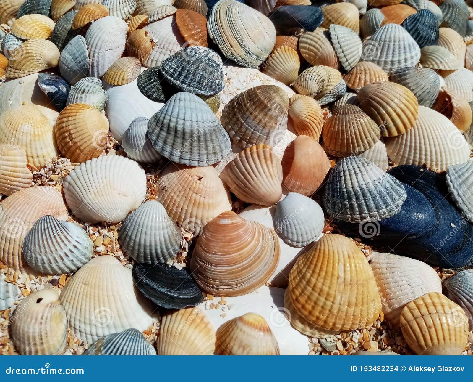 Interpr?teurs de commandes interactifs de mer sur le sable Fond de plage d ?t?