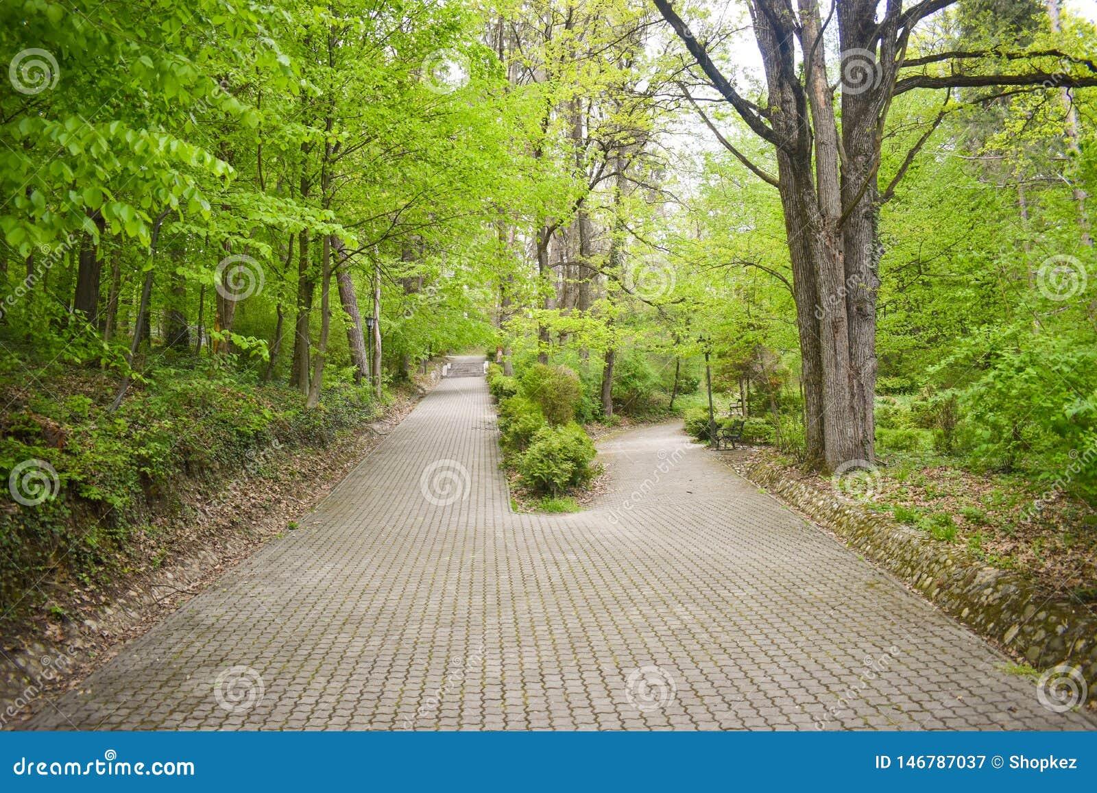 Intersecci?n de dos callejones en el parque entre ?rboles y arbustos El callej?n grande splitted en dos trayectorias m?s peque?as