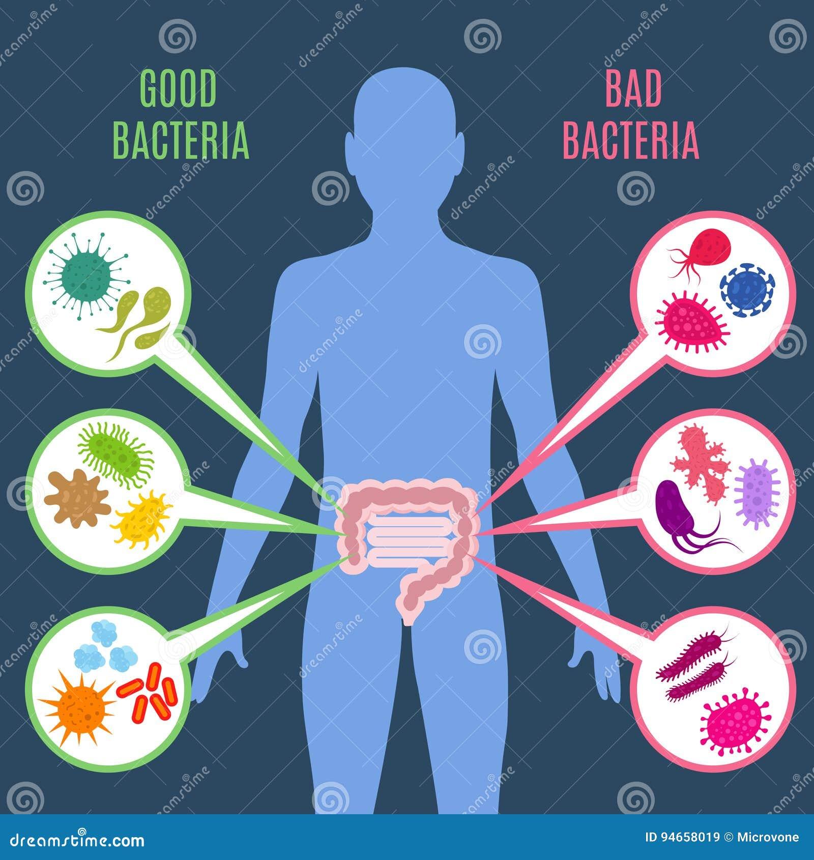 Intestinaal de gezondheids vectorconcept van de floradarm met bacteriën en probioticspictogrammen