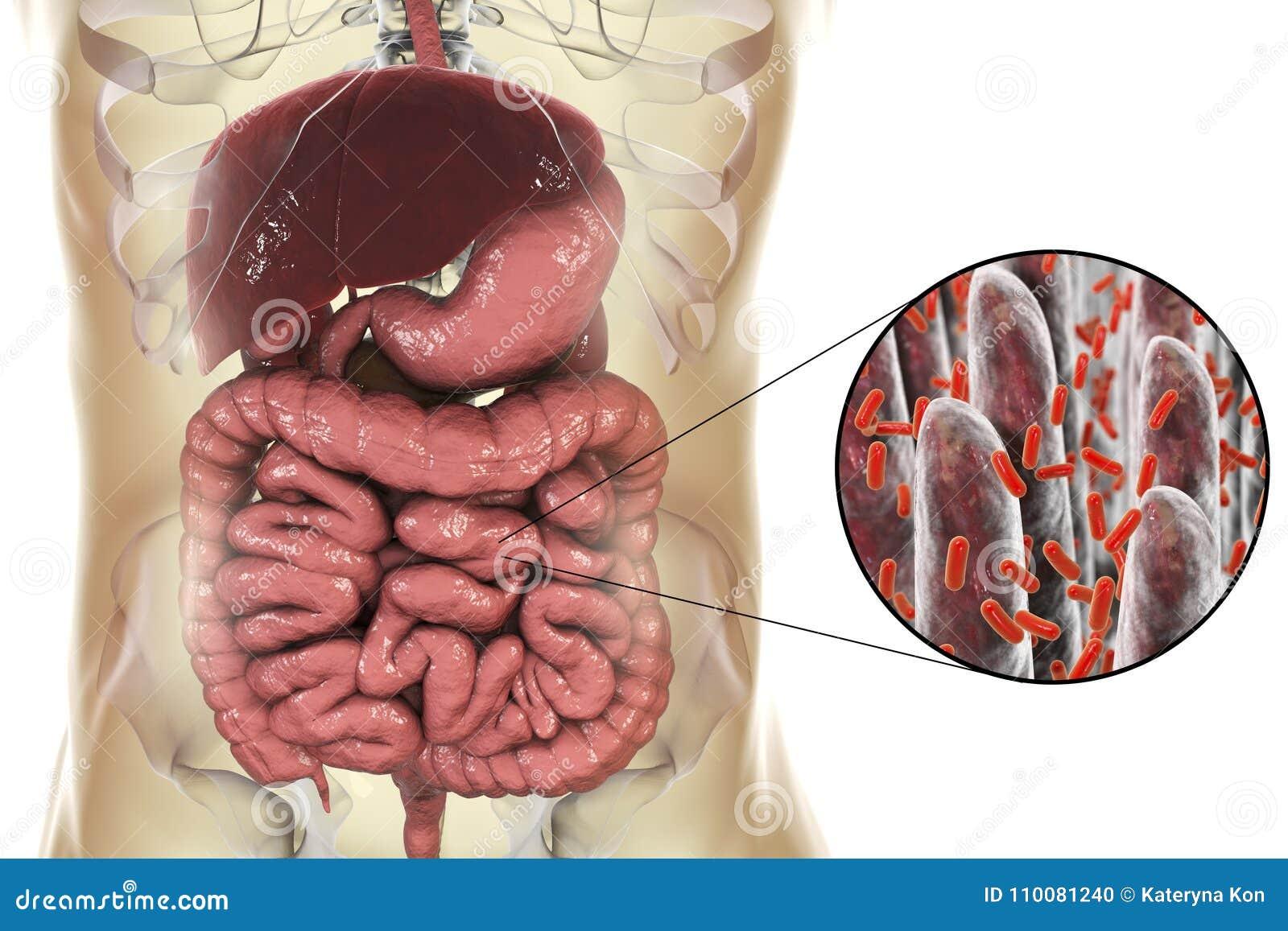 Intestinal Microbiome Close Up View Of Intestinal Villi And Enteric