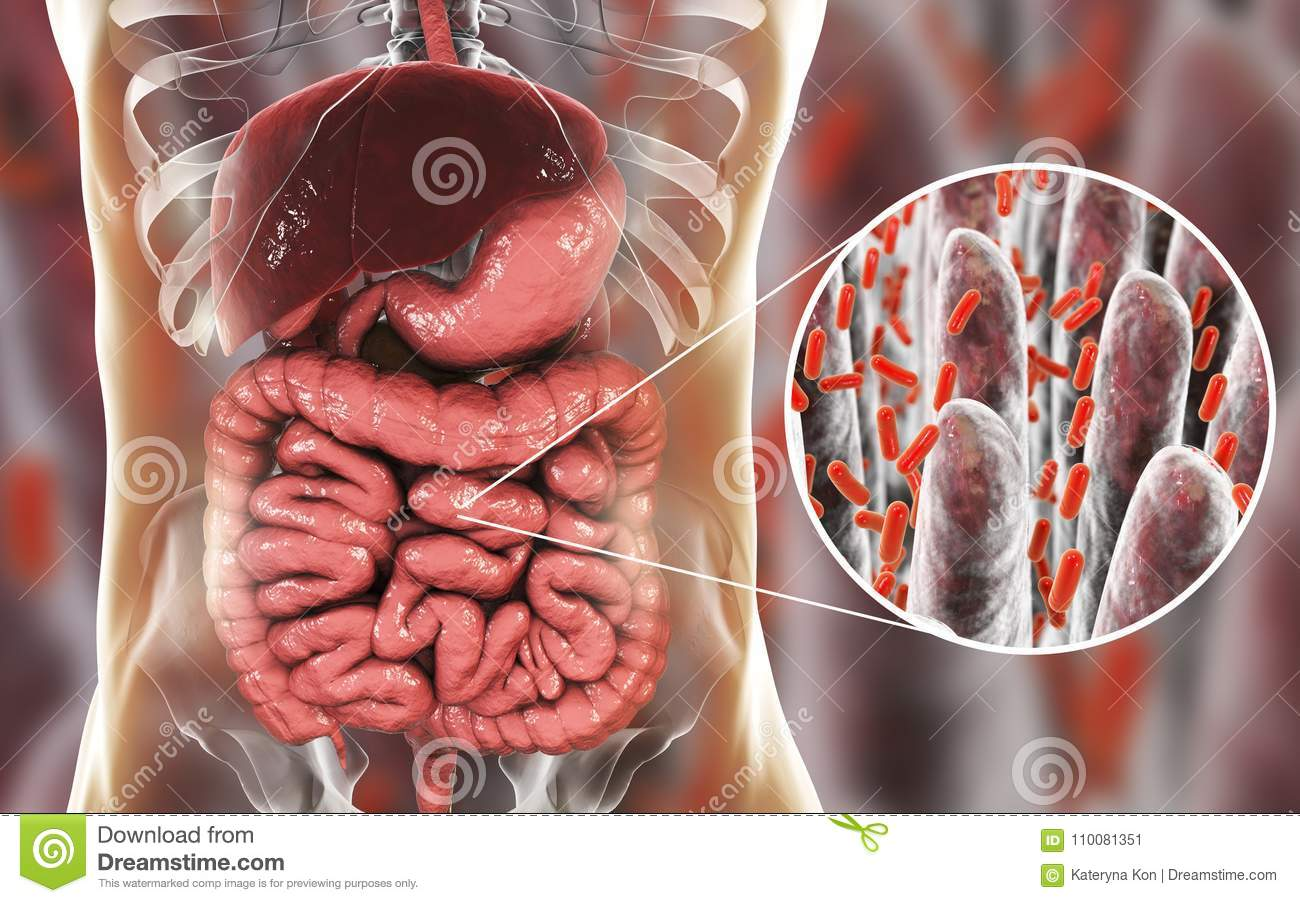 Intestinal Microbiome Close Up View Of Intestinal Villi And Enteric